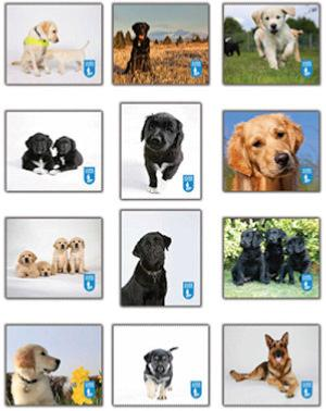 GUIDE DOGS ~ Microfibre Cleaning Cloth ~ Pocket size
